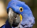 c_125_95_16777215_0_0_images_stories_birds_bolezni_1.jpg