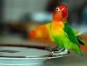 c_125_95_16777215_0_0_images_stories_birds_bolezni_2.jpg