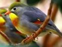 c_125_95_16777215_0_0_images_stories_birds_bolezni_4.jpg