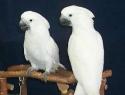 c_125_95_16777215_0_0_images_stories_birds_bolezni_7.jpg