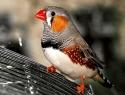c_125_95_16777215_0_0_images_stories_birds_bolezni_8.jpg