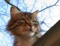 c_125_95_16777215_0_0_images_stories_cat_raznoe_1.jpg