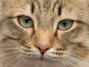 c_125_95_16777215_0_0_images_stories_cat_raznoe_2.jpg