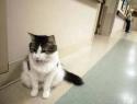 c_125_95_16777215_0_0_images_stories_cat_raznoe_3.jpg