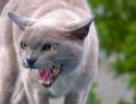 c_125_95_16777215_0_0_images_stories_cat_raznoe_4.jpg