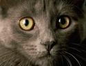 c_125_95_16777215_0_0_images_stories_cat_uhod_1.jpg