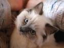 c_125_95_16777215_0_0_images_stories_cat_uhod_2.jpg