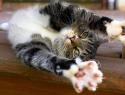 c_125_95_16777215_0_0_images_stories_cat_uhod_5.jpg