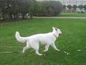 c_125_95_16777215_0_0_images_stories_dogs_raznoe_1.jpg