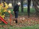 c_125_95_16777215_0_0_images_stories_dogs_raznoe_2.jpg