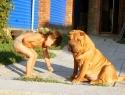 c_125_95_16777215_0_0_images_stories_dogs_raznoe_4.jpg